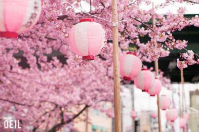Pink Lanterns and Blossoms